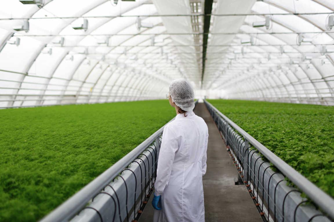 Invernaderos, la solución ideal para proteger plantas y semillas de las condiciones climatológicas