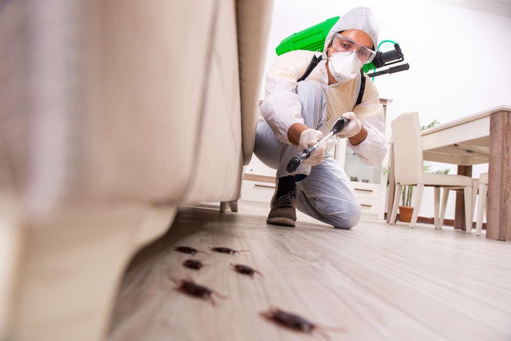 Los mejores consejos de control de plagas