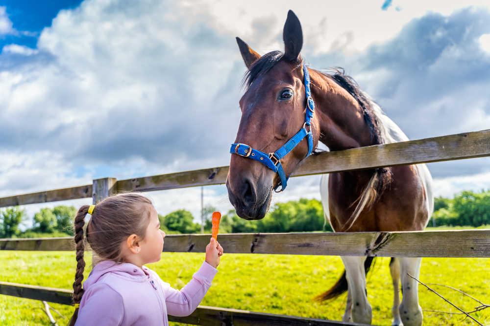 Cómo comenzar con un negocio de cría de caballos